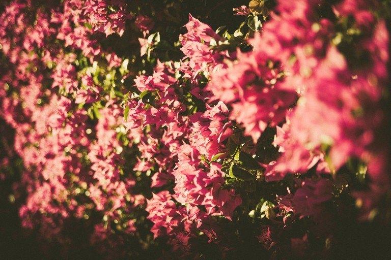 Huele a primavera